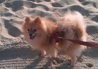 Cody Beach