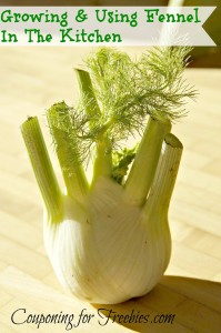 Growing And Using Fennel In Your Kitchen