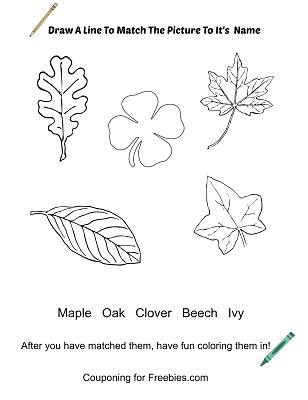 Leaf Coloring Work Sheet