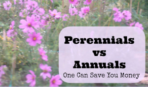 Perennials vs Annuals: One Can Save You More Money Then The Other One!