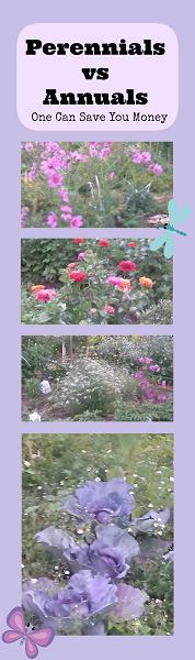 Perennials vs Annuals