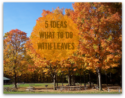 What To Do With Leaves